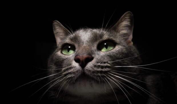 Кот застрял ввытяжке магазина вЕкатеринбурге