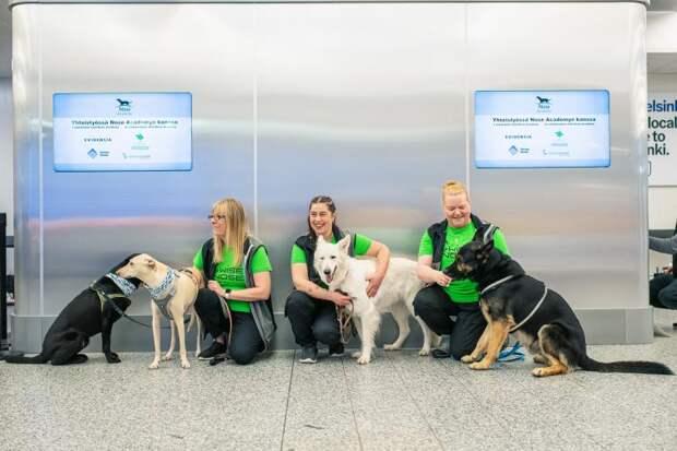 служебные собаки в аэропорту