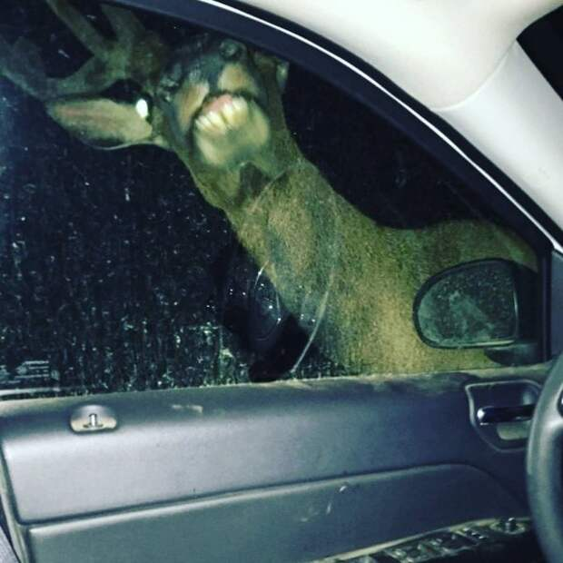 Забавные и неудачные моменты с животными на снимках