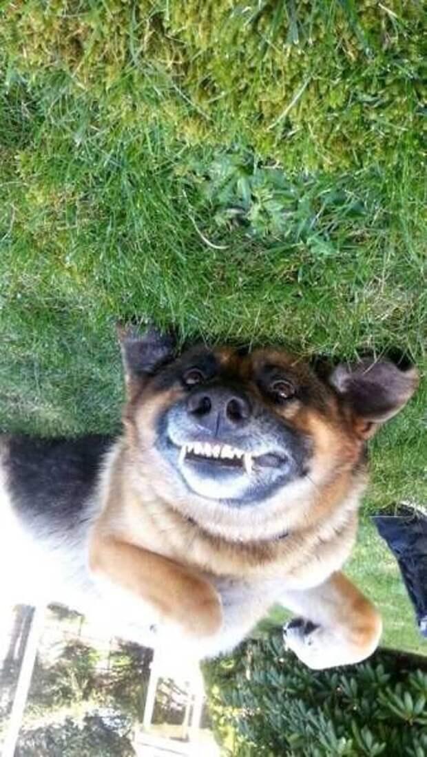Классные фото и смешные картинки для позитивного настроения