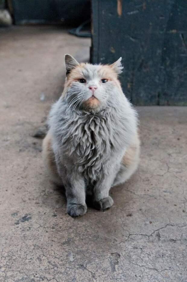 Все хотят вымыть как следует кота Грязнулю. Но это просто бесполезно…