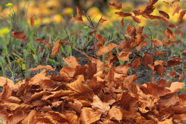 Усиление ветра ожидается в Удмуртии 8 ноября
