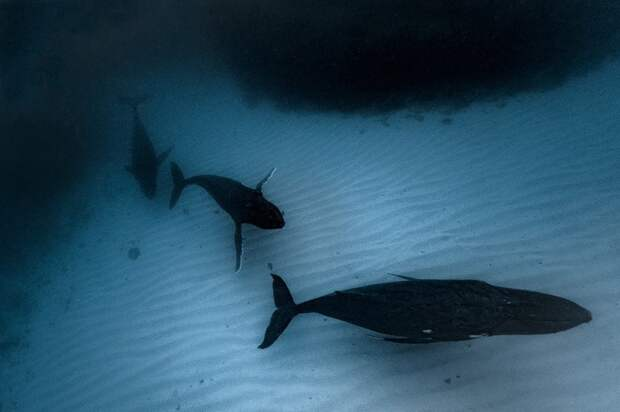 Фотограф делает фантастические снимки огромных китов
