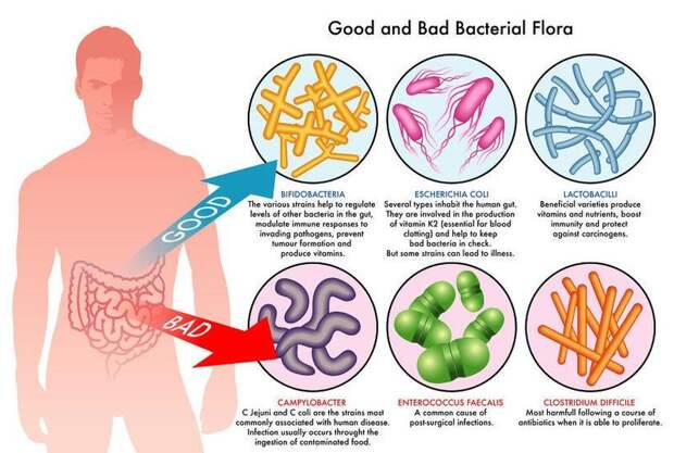 4 правила, которые помогут исцелить кишечник