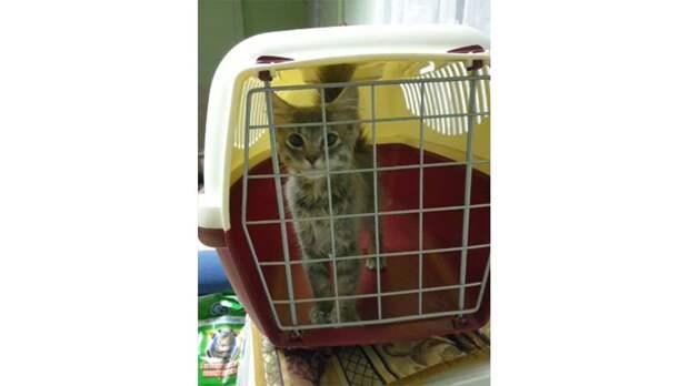 История спасения бездомного котенка, которого чуть не утащила лиса