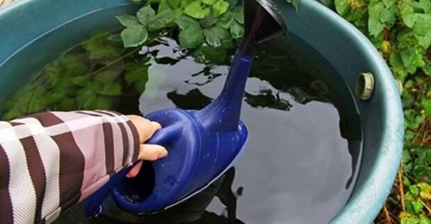 Как можно использовать дождевую воду?
