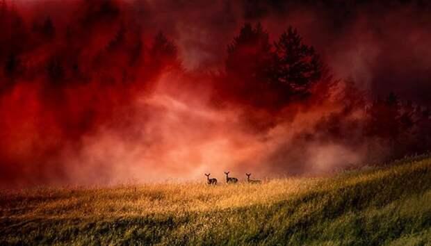Кровавый туман — загадка аномалии