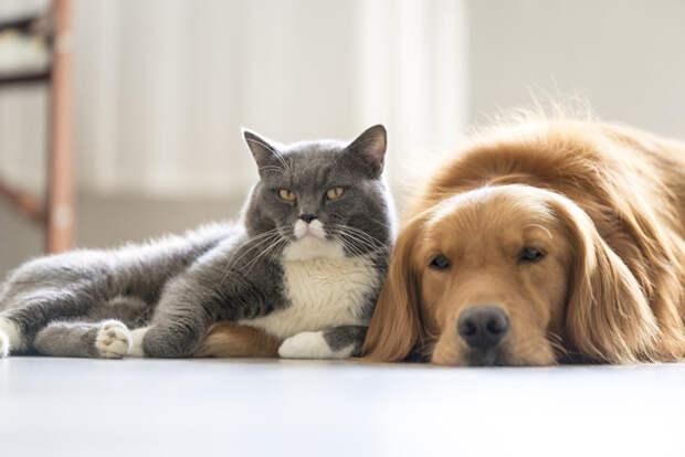 Кошки и собаки вредны для атмосферы Земли