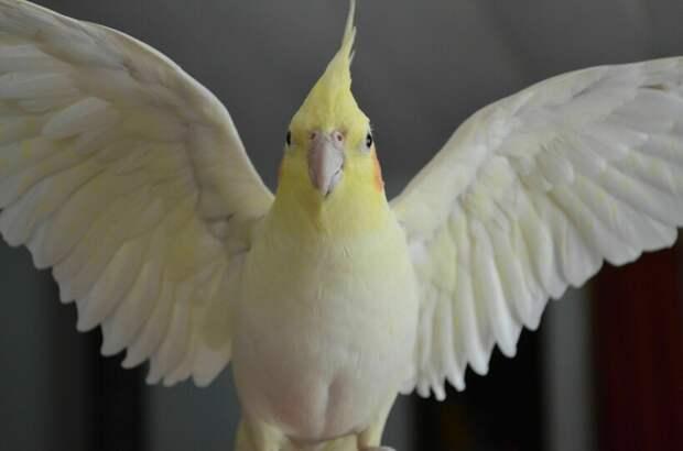 Видео: Тысячи попугаев обосновались в австралийском городке, чем озадачили людей