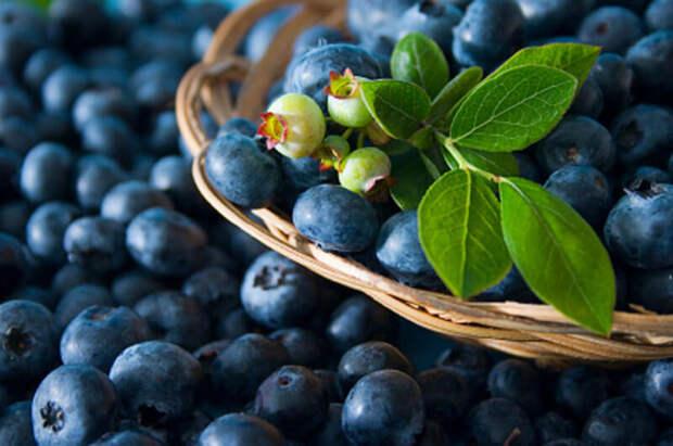 Диетолог рассказала о самой полезной ягоде, которая замедляет старение