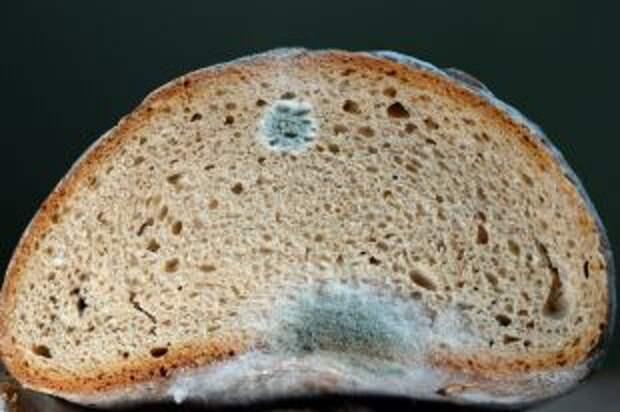 Что будет, если съесть хлеб с плесенью?