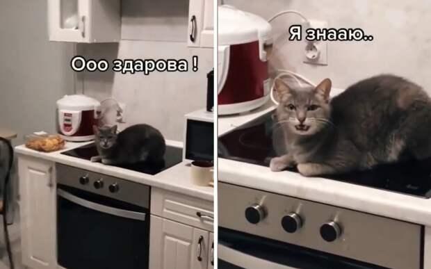 Беседа с котом: забавный разговор хозяина с вредным питомцем попал на видео