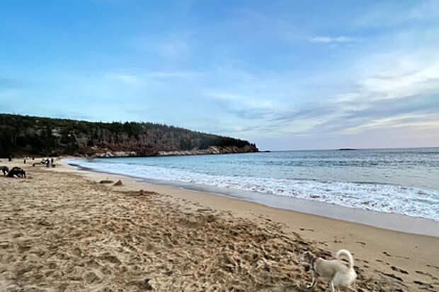 На пляж вынесло миллионы неизвестных насекомых