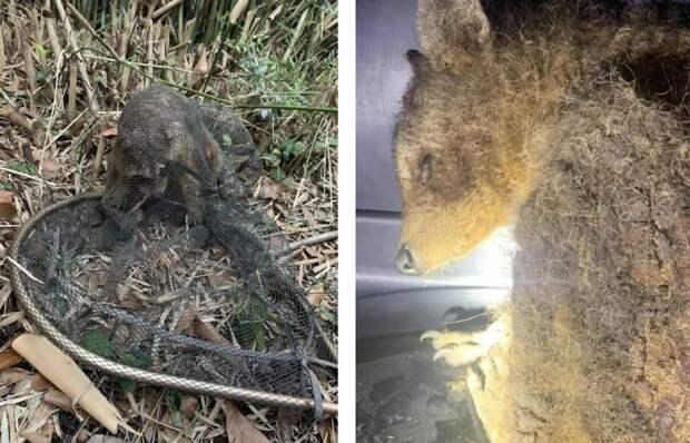 В лесу нашли удивительное животное, имеющее странный и неопрятный вид