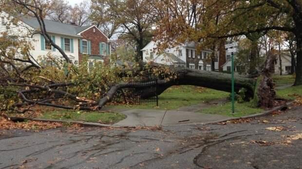 Режим ЧС введен в Ярославской области для устранения последствий урагана