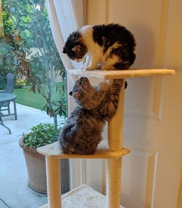 Женщина приютила двух котят, у которых не было хвостов