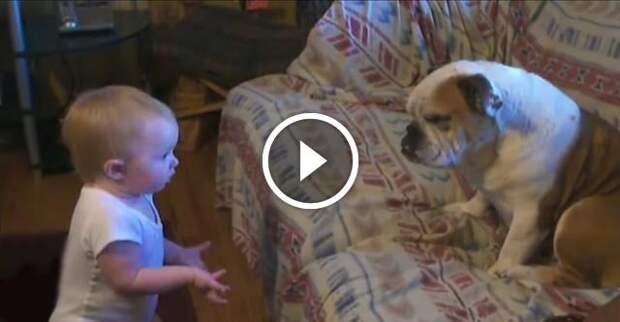 Малышка устроила скандал терпеливому псу