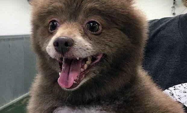 Семья полгода растила щенка и он встал на задние лапы. Ветеринар посмотрел и тут же ушел: собака оказалась медведем