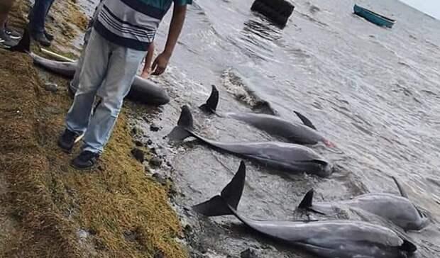 Нефть уберегов Маврикия убивает дельфинов