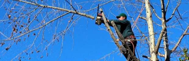 Минэкологии проверит вырубку 100 деревьев у завода мороженного в Алматинской области