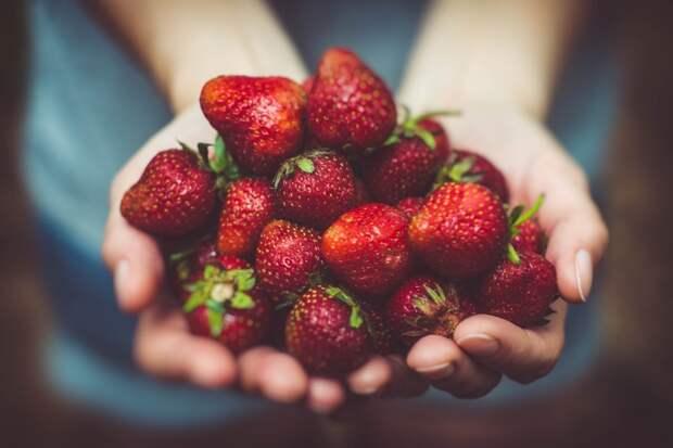 """Рук не хватит, чтобы собрать всю клубнику, если в сентябре так """"подкормить"""" грядки"""