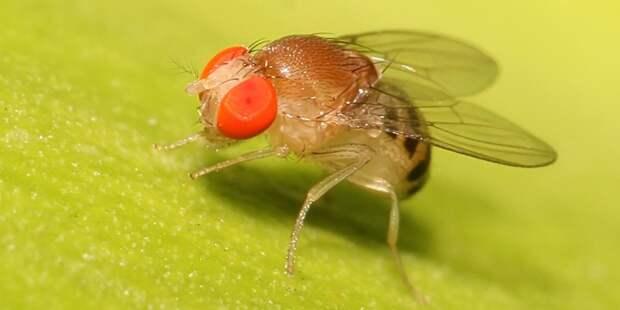 На МКС займутся выращиванием мух