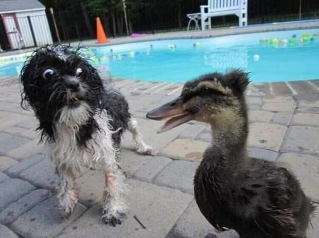 Несколько собак, которым внезапно стало очень-очень страшно