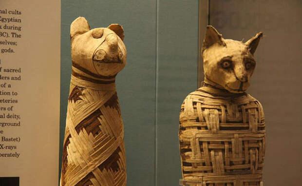 Пугающие факты о настоящих мумиях