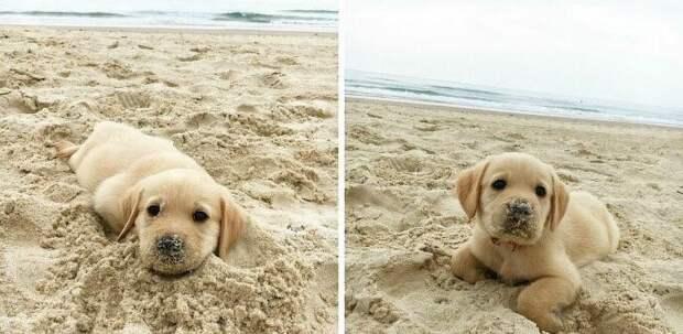 13. Вы надо мной прикалываетесь. Мы оцениваем только собак. Пожалуйста, не присылайте непослушных морских улиток, испачканных в песке. Проявите уважение. Спасибо... 13/10 животные, оценка, популярный, собака, собаки, соцсети, твиттер, юмор