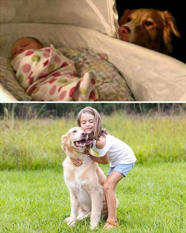 Как быстро бежит время: собаки в детстве и сейчас