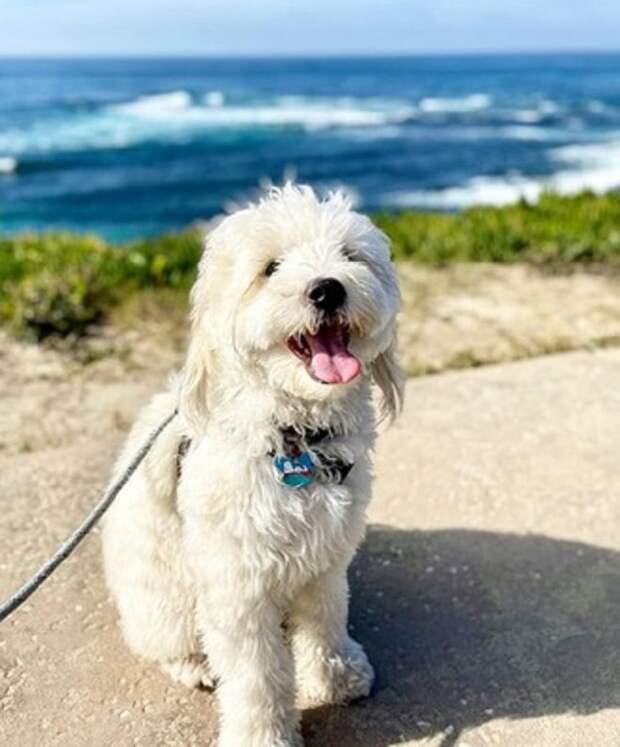 Некогда брошенный пушистый пёс сегодня ведёт райскую жизнь у моря