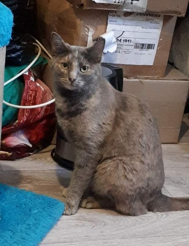 Кошка Джессика еще не нашлась. Фото: Татьяна КОТОВА.