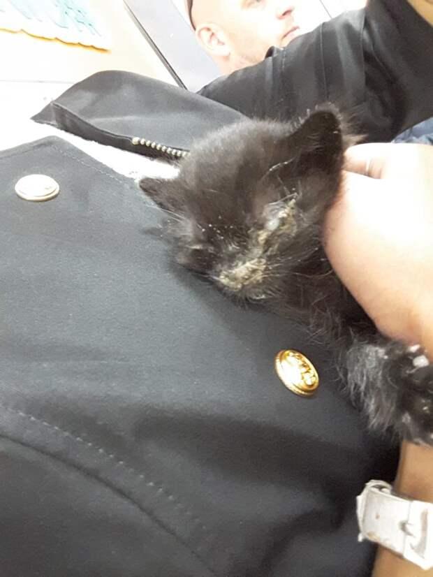 Малыш-котёнок почти не дышал, лёжа на земле. Девушка взяла кроху на руки и услышала, что его сердце едва слышно бьётся…