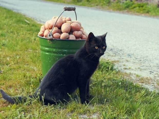 Картошка по 120 рублей за килограмм напугала покупательницу