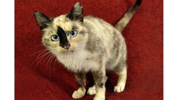 Бездомная кошка из Костромы усыновила осиротевших котят