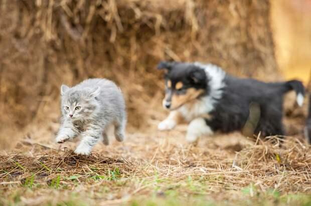 Девять странных привычек домашних животных, которые ставят нас в тупик