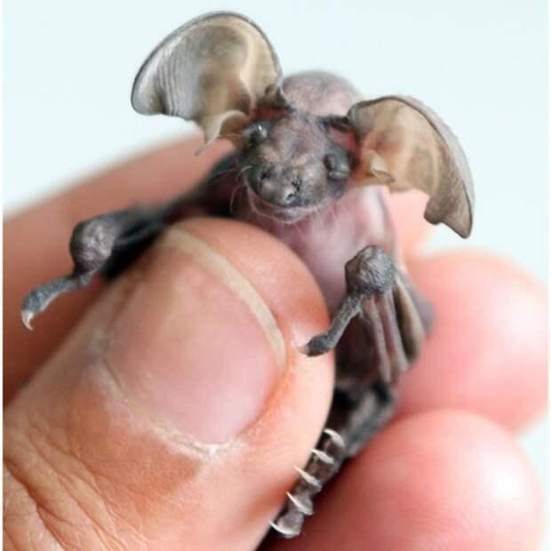 25 самых симпатичных видов летучих мышей