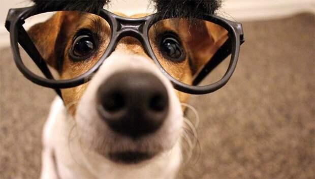 Подборка интересных фактов о собаках