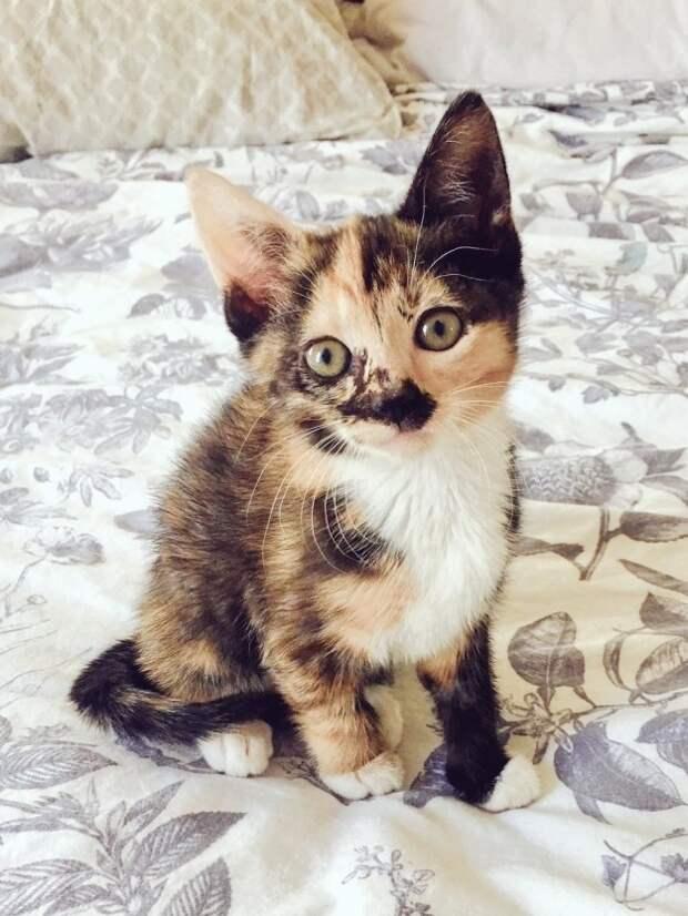 13. Четырех-цветный котик приносит удачу котики, мимими