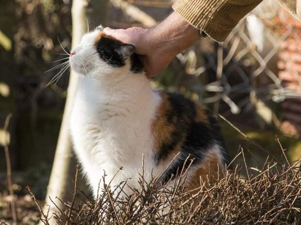 Россияне входят в десятку самых больших любителей кошек в мире