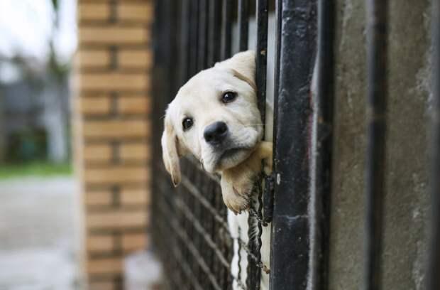 Жители США массово возвращают вприюты собак ищенков, взятых вовремя пандемии