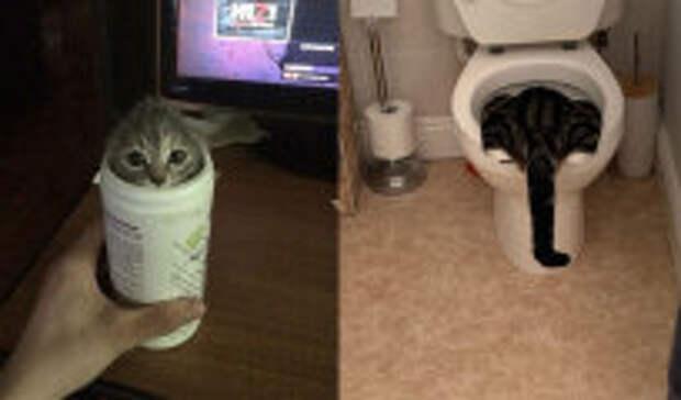 Фотография: Фотографии кошек, которые не просто гуляют сами по себе, а занимают места, где их не должно быть