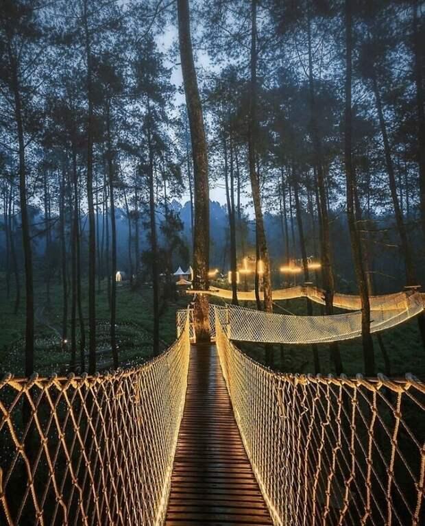 Путешествуем онлайн: самый волшебный мост вИндонезии
