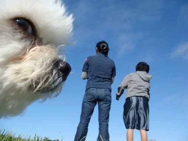 Облако-пес в кадре, главные герои, животные, забавно, смешно, фото, юмор