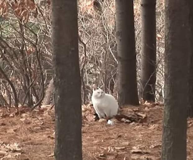 Брошенный кот ждал хозяина в лесу, толстея по непонятным причинам