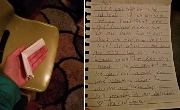 Любящий прогулки кот однажды вернулся с необычной запиской от соседа