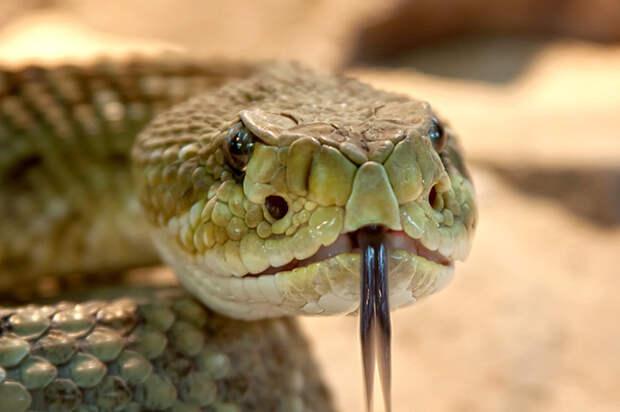 Мужчина постоянно находил дома змей и никак не мог понять, откуда они берутся