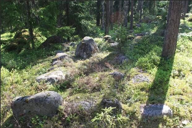 Разные истории из леса: странные, страшные, чудесные