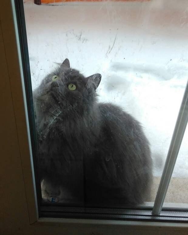 Два года назад к девушке пришла грязная кошка. Семья чуточку запуталась и дала ей «неправильную» кличку