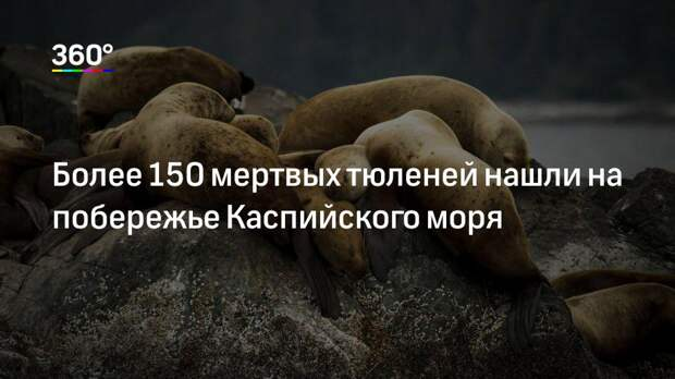 Более 150 мертвых тюленей нашли на побережье Каспийского моря